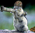Army squirrel.jpg